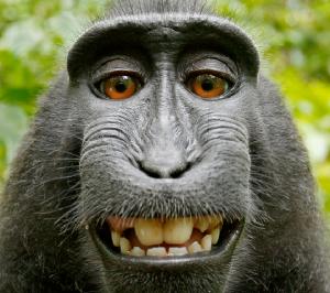 story_monkey